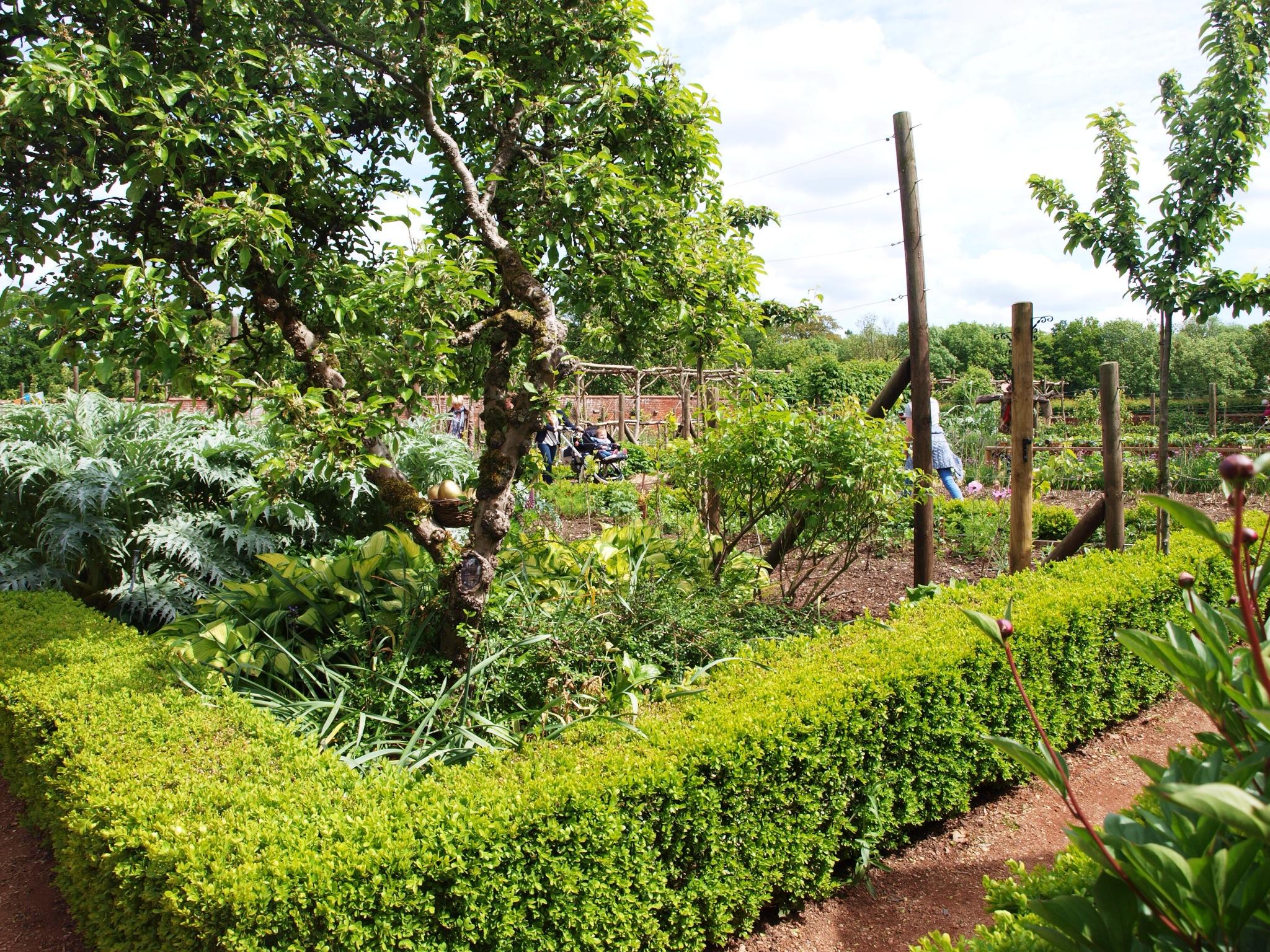 kitchen garden | Heaven Scent Gardens